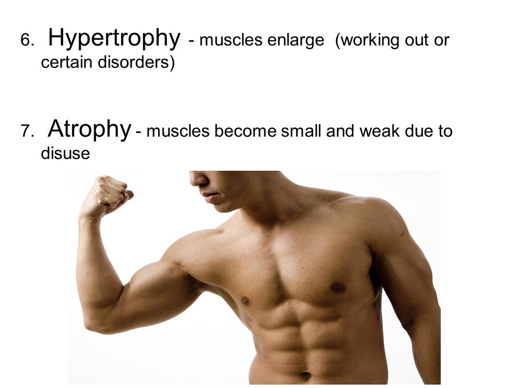 6. Hypertrophy - muscles enlarge (working out or certain disorders) 7. Atrophy - muscles become small and weak due to disuse