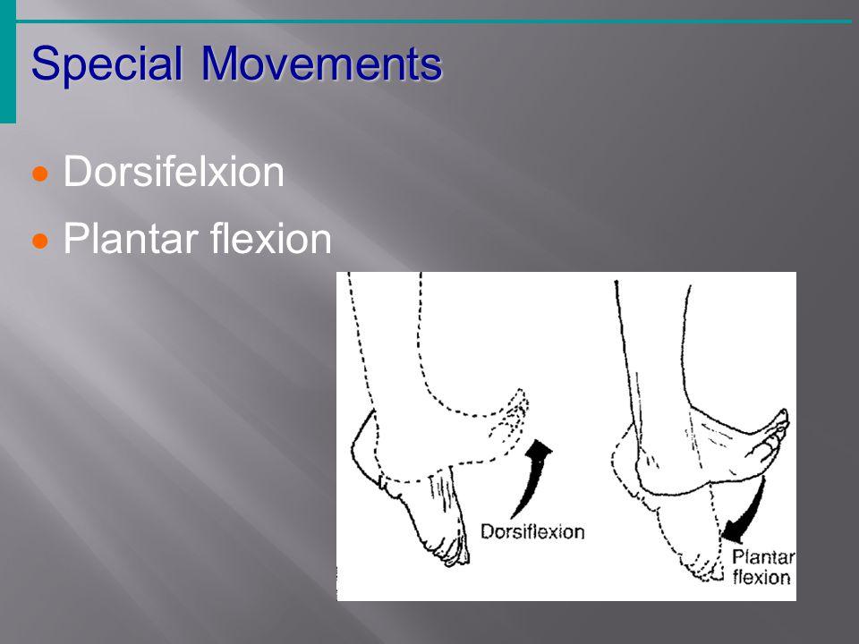  Dorsifelxion  Plantar flexion Special Movements