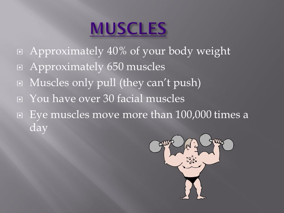  Approximately 40% of your body weight  Approximately 650 muscles  Muscles only pull (they can't push)  You have over 30 facial muscles  Eye musc
