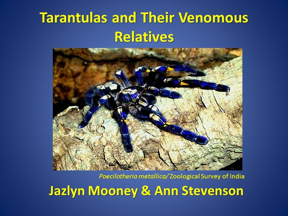 Tarantulas and Their Venomous Relatives Poecilotheria metallica/ Zoological Survey of India Jazlyn Mooney & Ann Stevenson Jazlyn Mooney & Ann Stevenson