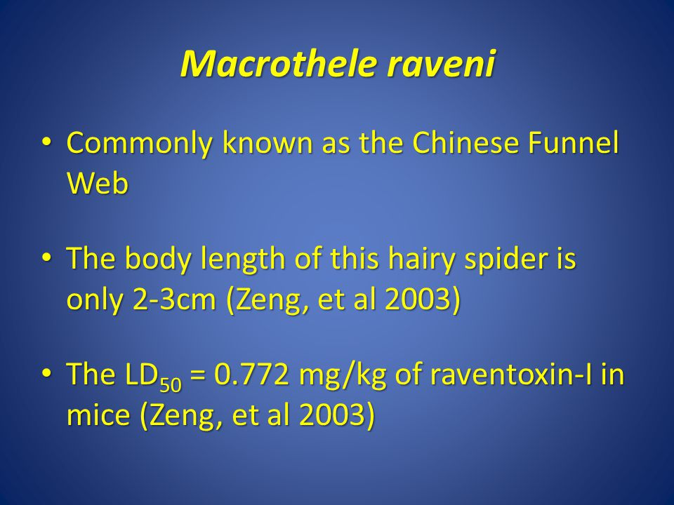 Macrothele raveni Commonly known as the Chinese Funnel Web Commonly known as the Chinese Funnel Web The body length of this hairy spider is only 2-3cm (Zeng, et al 2003) The body length of this hairy spider is only 2-3cm (Zeng, et al 2003) The LD 50 = 0.772 mg/kg of raventoxin-I in mice (Zeng, et al 2003) The LD 50 = 0.772 mg/kg of raventoxin-I in mice (Zeng, et al 2003)