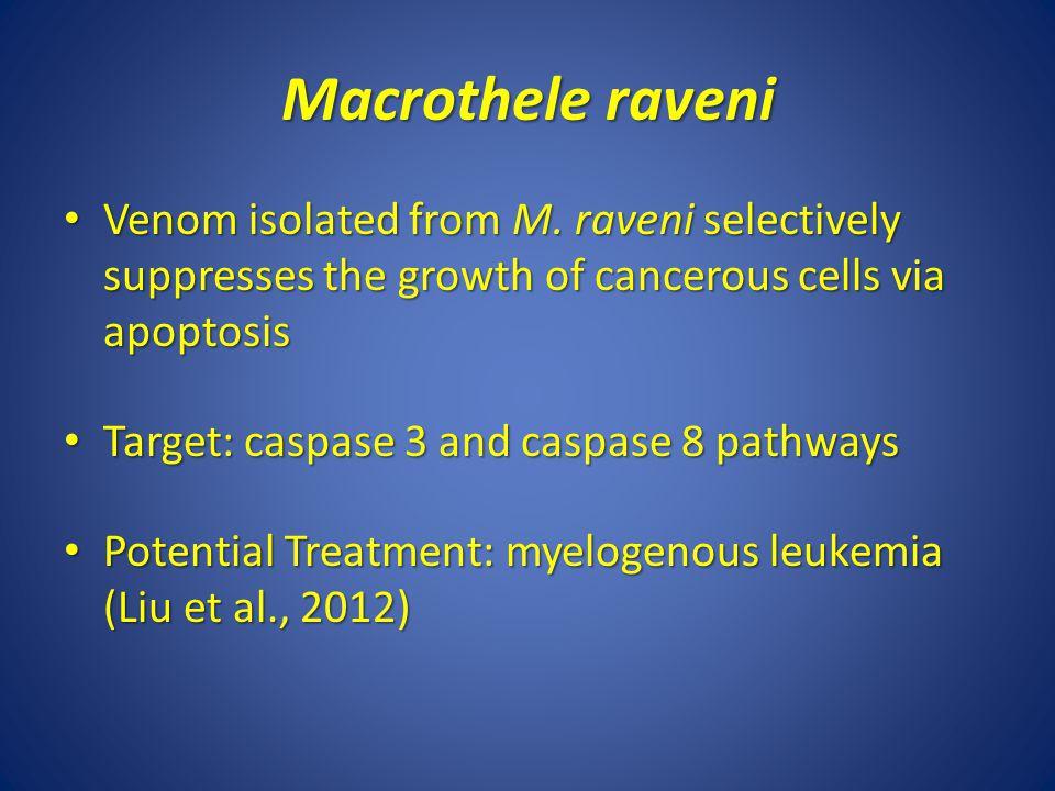 Macrothele raveni Venom isolated from M.