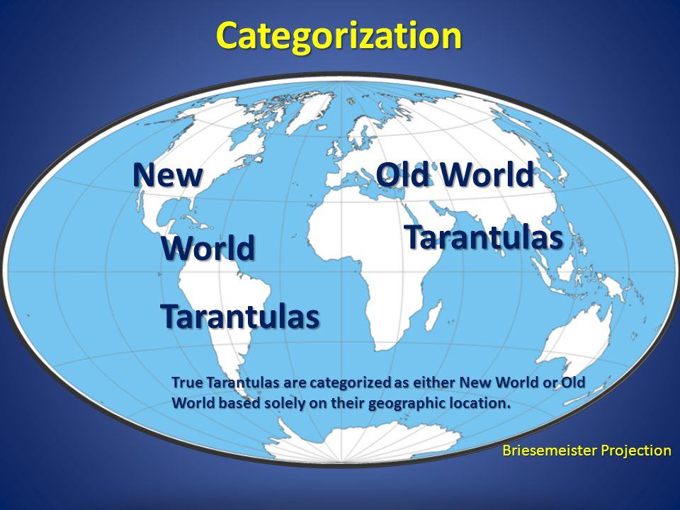 New World Old World Categorization True Tarantulas are categorized as either New World or Old World based solely on their geographic location.