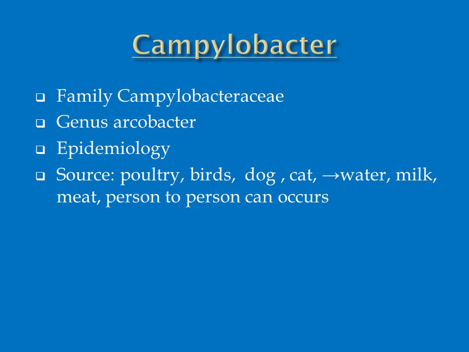  Family Campylobacteraceae  Genus arcobacter  Epidemiology  Source: poultry, birds, dog, cat, →water, milk, meat, person to person can occurs