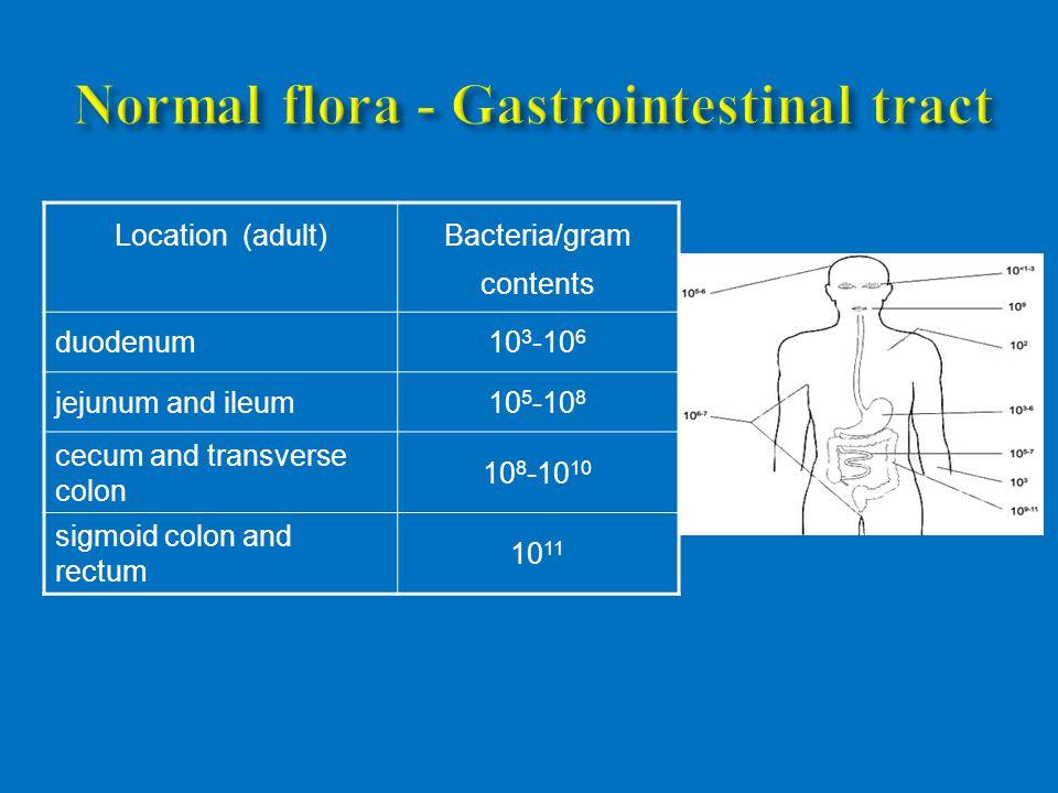 Location (adult) Bacteria/gram contents duodenum10 3 -10 6 jejunum and ileum10 5 -10 8 cecum and transverse colon 10 8 -10 10 sigmoid colon and rectum 10 11