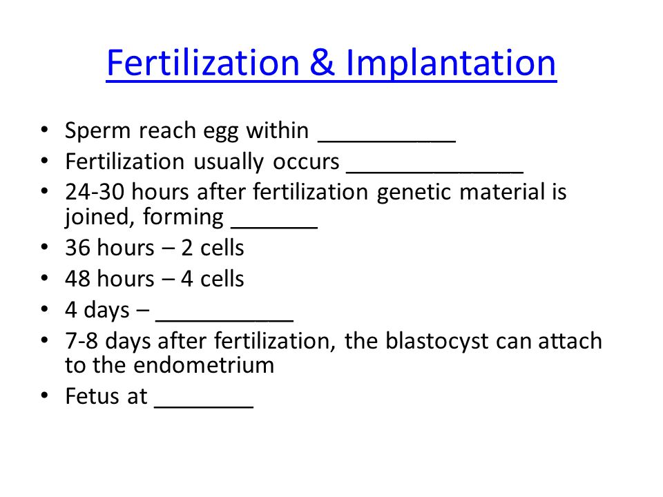 Fertilization & Implantation Sperm reach egg within ___________ Fertilization usually occurs ______________ 24-30 hours after fertilization genetic material is joined, forming _______ 36 hours – 2 cells 48 hours – 4 cells 4 days – ___________ 7-8 days after fertilization, the blastocyst can attach to the endometrium Fetus at ________