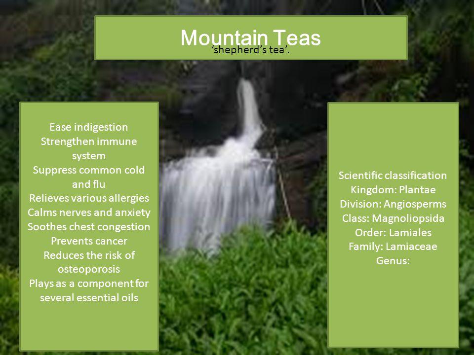 Scientific classification Kingdom: Plantae Division: Angiosperms Class: Magnoliopsida Order: Lamiales Family: Lamiaceae Genus: Mountain Teas 'shepherd's tea'.