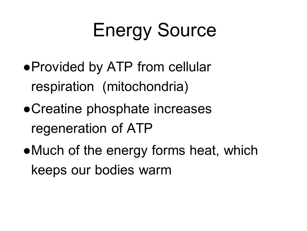 Energy Source ● Provided by ATP from cellular respiration (mitochondria) ● Creatine phosphate increases regeneration of ATP ● Much of the energy forms