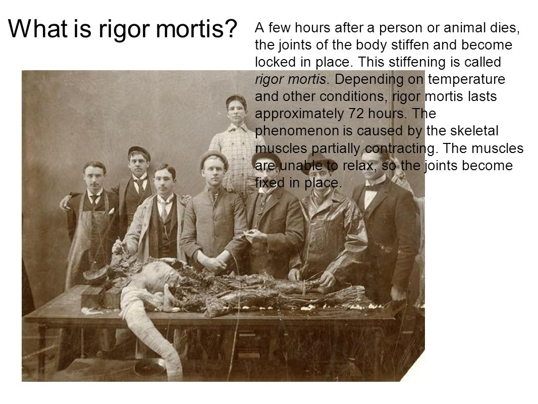 What is rigor mortis? A few hours after a person or animal dies, the joints of the body stiffen and become locked in place. This stiffening is called