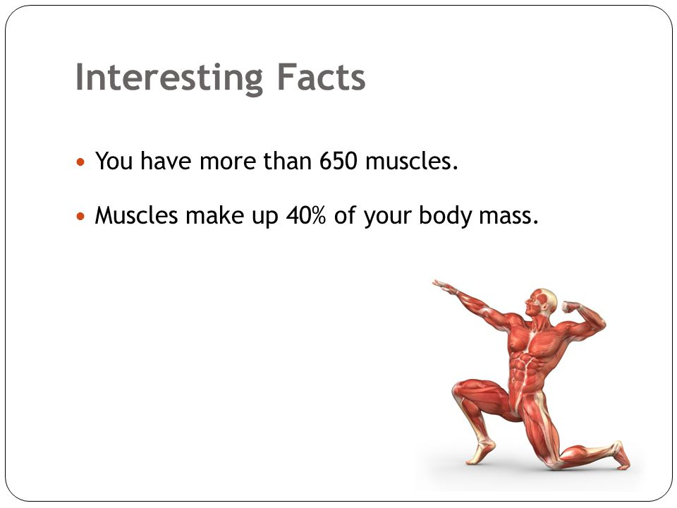 Interesting Facts You have more than 650 muscles. Muscles make up 40% of your body mass.