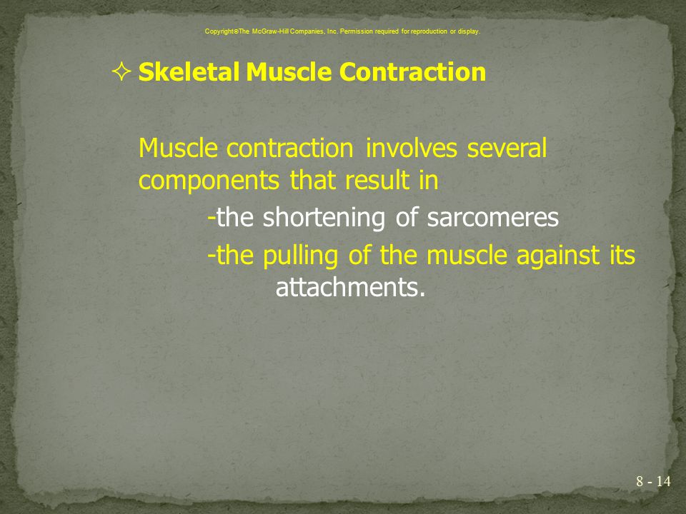  Skeletal Muscle Contraction Muscle contraction involves several components that result in -the shortening of sarcomeres -the pulling of the muscle a