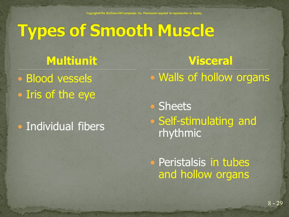 8 - 29 Multiunit Blood vessels Iris of the eye Individual fibers Walls of hollow organs Sheets Self-stimulating and rhythmic Peristalsis in tubes and