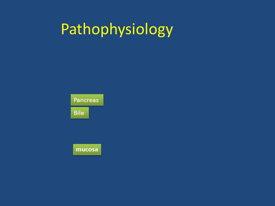 Pathophysiology Pancreas Bile mucosa