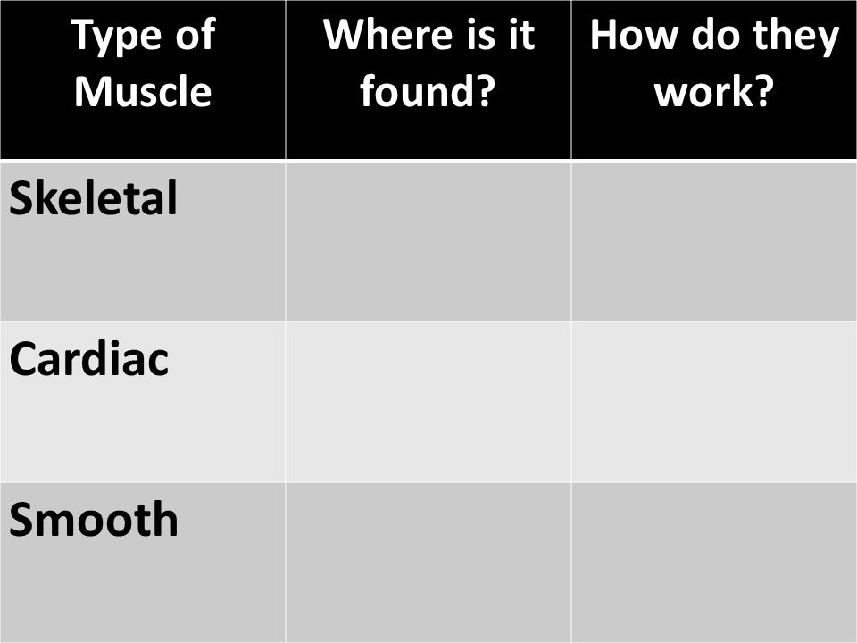Type of Muscle Where is it found? How do they work? Skeletal Cardiac Smooth
