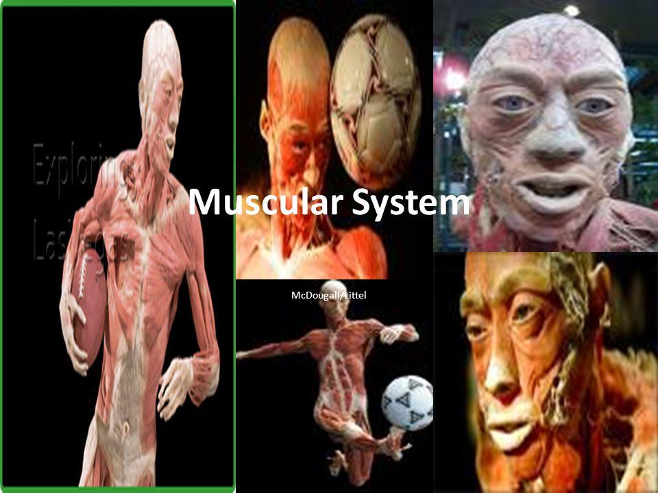 McDougall/Littel Muscular System