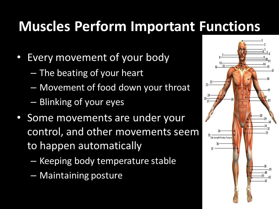 Muscles Perform Important Functions Every movement of your body – The beating of your heart – Movement of food down your throat – Blinking of your eye
