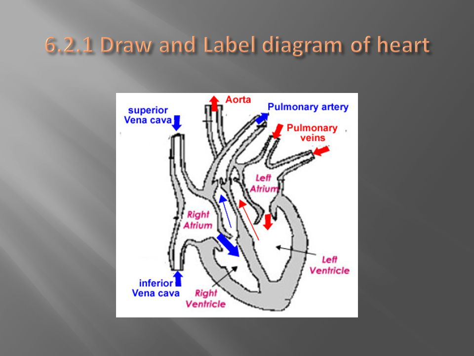  Cardiac cycle is all heart events from the beginning of one heartbeat to the beginning of the next heartbeat  The frequency of the cardiac cycle is your heart rate (beats per minute)  Electrical signal causes muscle fibers of the heart chamber to contract.