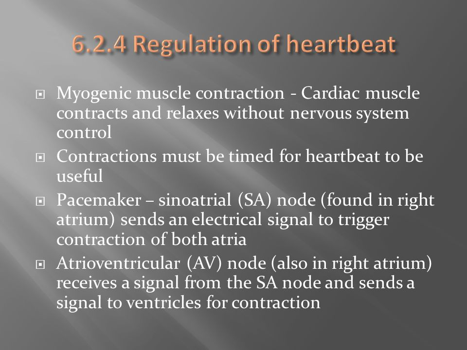  Myogenic muscle contraction - Cardiac muscle contracts and relaxes without nervous system control  Contractions must be timed for heartbeat to be u