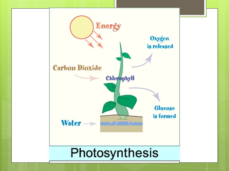 Photosynthesis photosynthesis song keystone anchors bioa 6 type i explain the process of photosynthesis using the diagram on the previous page use at least 3 lines ccuart Choice Image