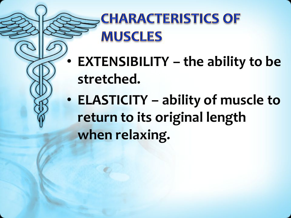 EXTENSIBILITY – the ability to be stretched. ELASTICITY – ability of muscle to return to its original length when relaxing.