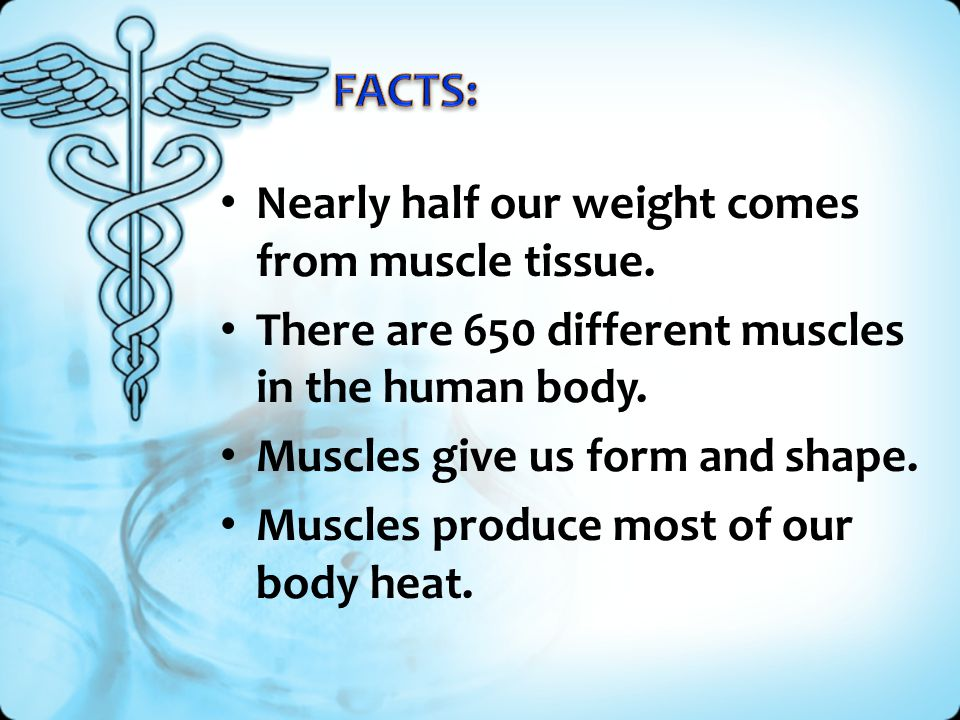Nearly half our weight comes from muscle tissue. There are 650 different muscles in the human body. Muscles give us form and shape. Muscles produce mo