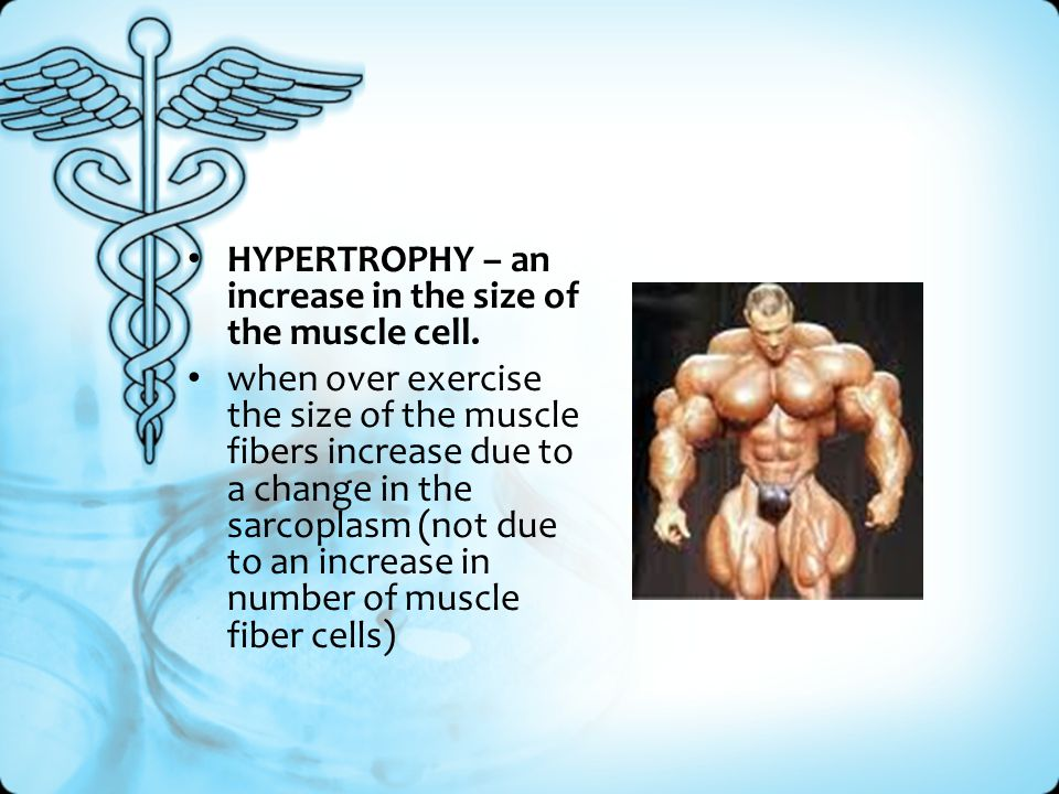 HYPERTROPHY – an increase in the size of the muscle cell. when over exercise the size of the muscle fibers increase due to a change in the sarcoplasm