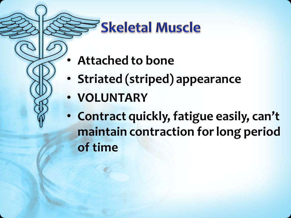 Attached to bone Striated (striped) appearance VOLUNTARY Contract quickly, fatigue easily, can't maintain contraction for long period of time
