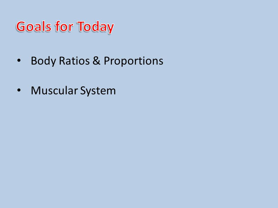 Body Ratios & Proportions Muscular System