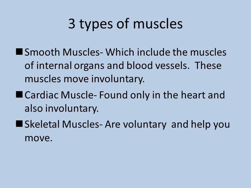 3 types of muscles Smooth Muscles- Which include the muscles of internal organs and blood vessels. These muscles move involuntary. Cardiac Muscle- Fou