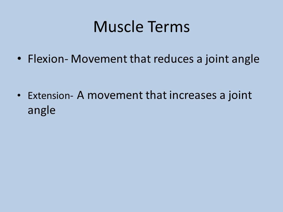 Muscle Terms Flexion- Movement that reduces a joint angle Extension- A movement that increases a joint angle
