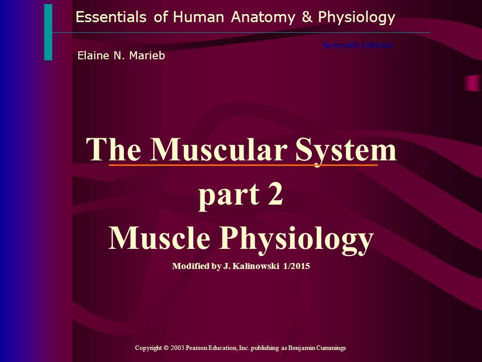 Essentials of Human Anatomy & Physiology Copyright © 2003 Pearson Education, Inc. publishing as Benjamin Cummings Seventh Edition Elaine N. Marieb The