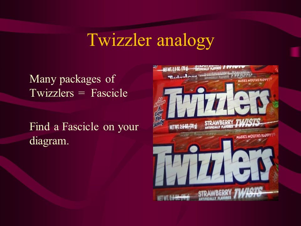 Twizzler analogy Many packages of Twizzlers = Fascicle Find a Fascicle on your diagram.