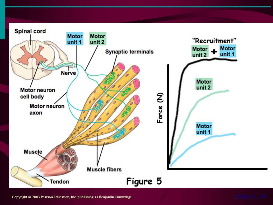 Slide 6.14 Copyright © 2003 Pearson Education, Inc. publishing as Benjamin Cummings Figure 6.4a