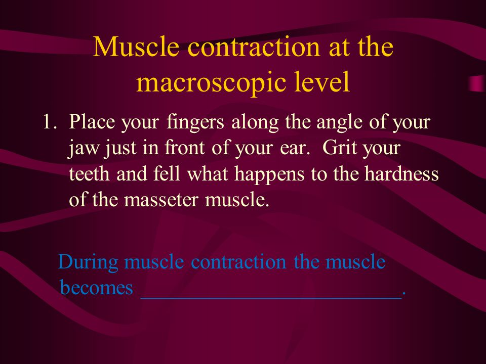 Muscle contraction at the macroscopic level 1.Place your fingers along the angle of your jaw just in front of your ear. Grit your teeth and fell what