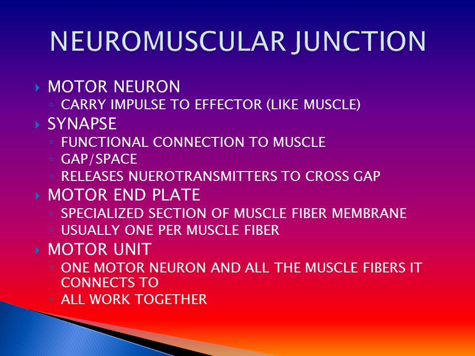 MMOTOR NEURON ◦C◦CARRY IMPULSE TO EFFECTOR (LIKE MUSCLE) SSYNAPSE ◦F◦FUNCTIONAL CONNECTION TO MUSCLE ◦G◦GAP/SPACE ◦R◦RELEASES NUEROTRANSMITTERS TO CROSS GAP MMOTOR END PLATE ◦S◦SPECIALIZED SECTION OF MUSCLE FIBER MEMBRANE ◦U◦USUALLY ONE PER MUSCLE FIBER MMOTOR UNIT ◦O◦ONE MOTOR NEURON AND ALL THE MUSCLE FIBERS IT CONNECTS TO ◦A◦ALL WORK TOGETHER