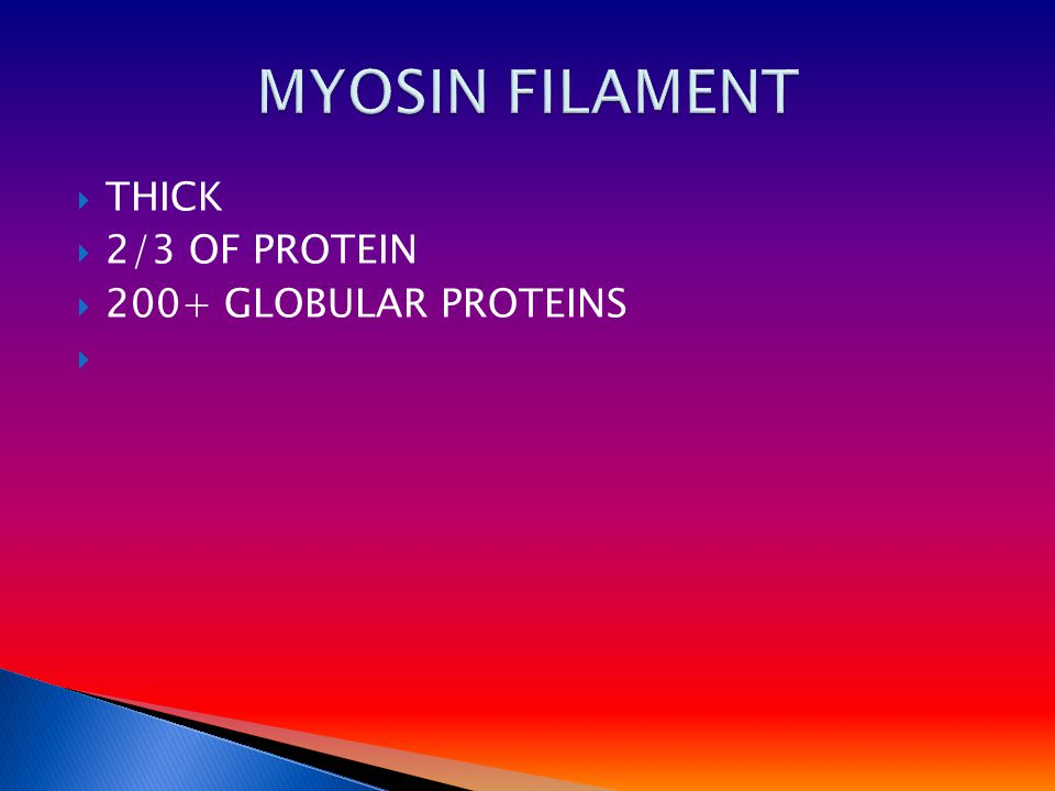  THICK  2/3 OF PROTEIN  200+ GLOBULAR PROTEINS 