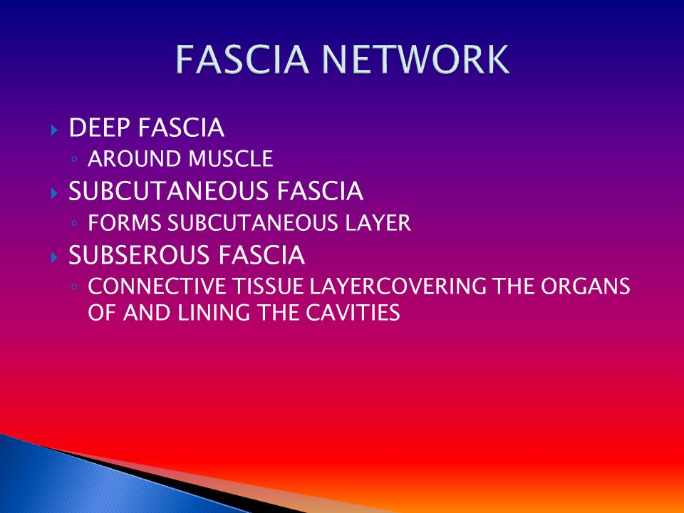 DDEEP FASCIA ◦A◦AROUND MUSCLE SSUBCUTANEOUS FASCIA ◦F◦FORMS SUBCUTANEOUS LAYER SSUBSEROUS FASCIA ◦C◦CONNECTIVE TISSUE LAYERCOVERING THE ORGANS OF AND LINING THE CAVITIES