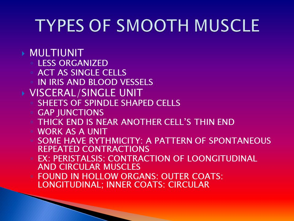  MULTIUNIT ◦ LESS ORGANIZED ◦ ACT AS SINGLE CELLS ◦ IN IRIS AND BLOOD VESSELS  VISCERAL/SINGLE UNIT ◦ SHEETS OF SPINDLE SHAPED CELLS ◦ GAP JUNCTIONS