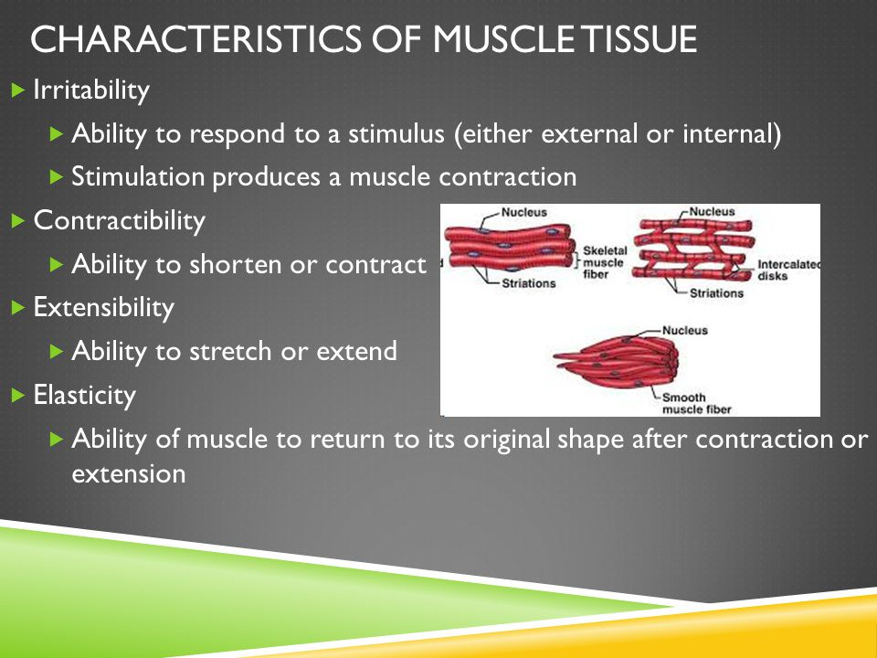 TYPES OF MUSCLES  Skeletal – striated and voluntary  Smooth – involuntary  Cardiac – heart