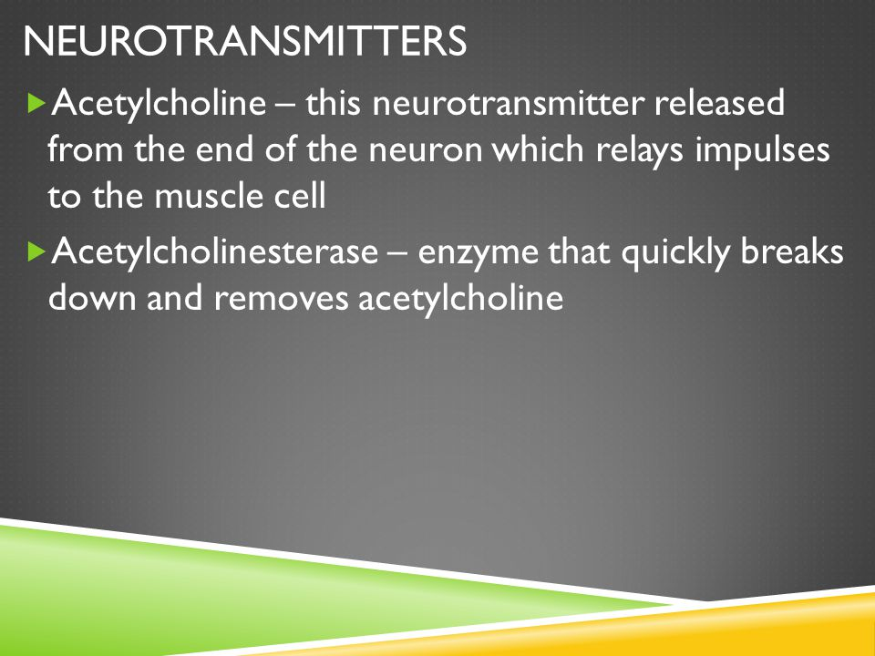 NEUROTRANSMITTERS  Acetylcholine – this neurotransmitter released from the end of the neuron which relays impulses to the muscle cell  Acetylcholine