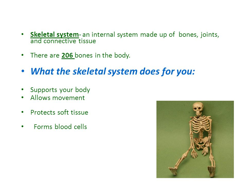 Skeletal system- an internal system made up of bones, joints, and connective tissue There are 206 bones in the body.