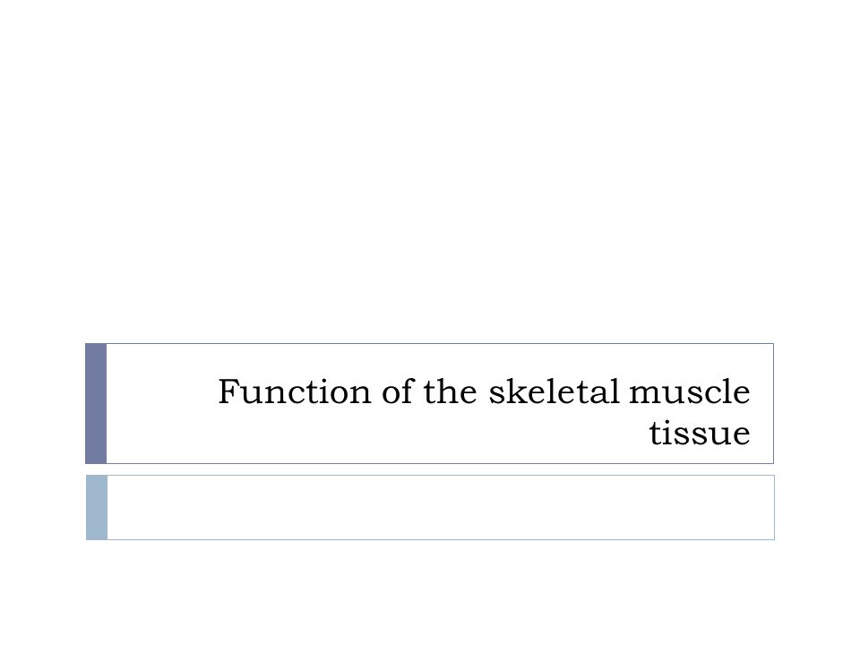 Function of the skeletal muscle tissue