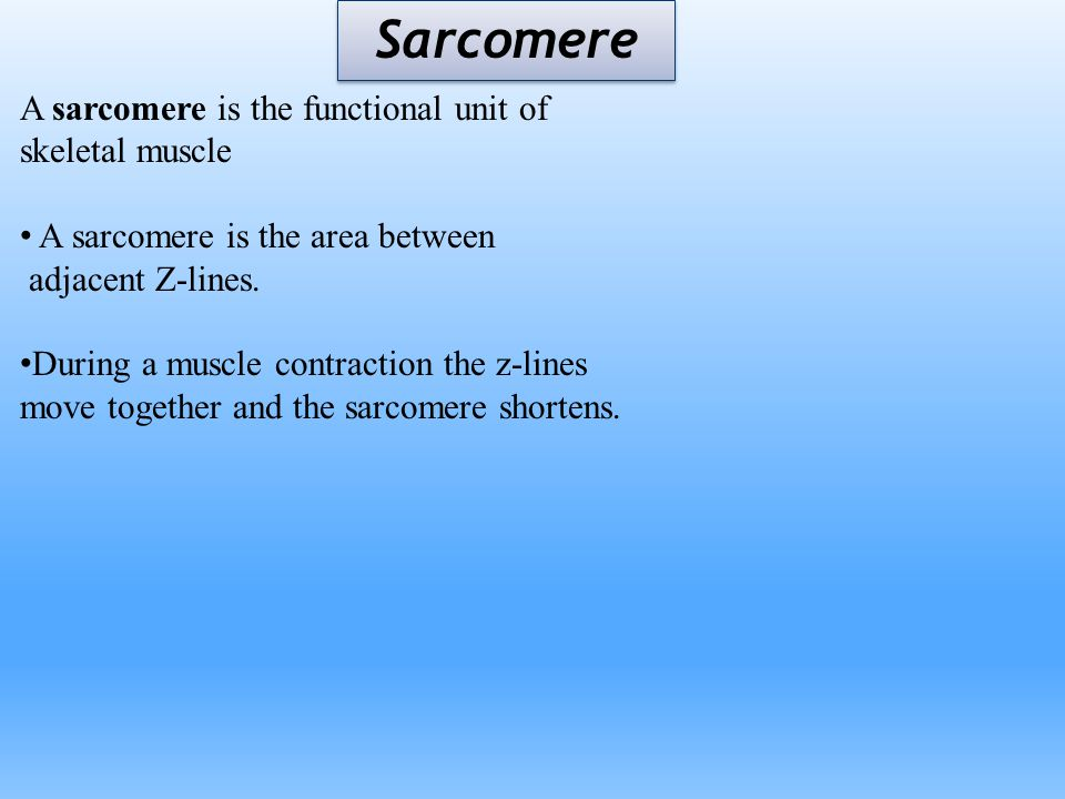 Sarcomere A sarcomere is the functional unit of skeletal muscle A sarcomere is the area between adjacent Z-lines. During a muscle contraction the z-li