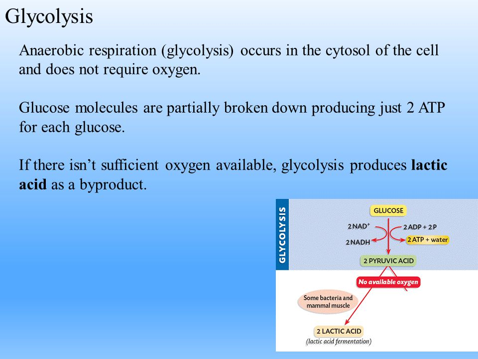 Glycolysis Anaerobic respiration (glycolysis) occurs in the cytosol of the cell and does not require oxygen. Glucose molecules are partially broken do
