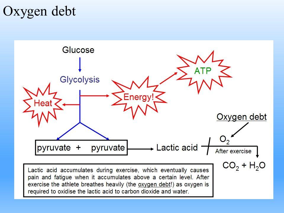 Oxygen debt