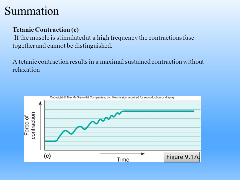 Tetanic Contraction (c) If the muscle is stimulated at a high frequency the contractions fuse together and cannot be distinguished. A tetanic contract