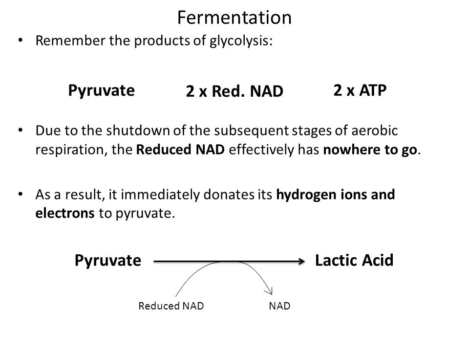 Fermentation Remember the products of glycolysis: Due to the shutdown of the subsequent stages of aerobic respiration, the Reduced NAD effectively has nowhere to go.