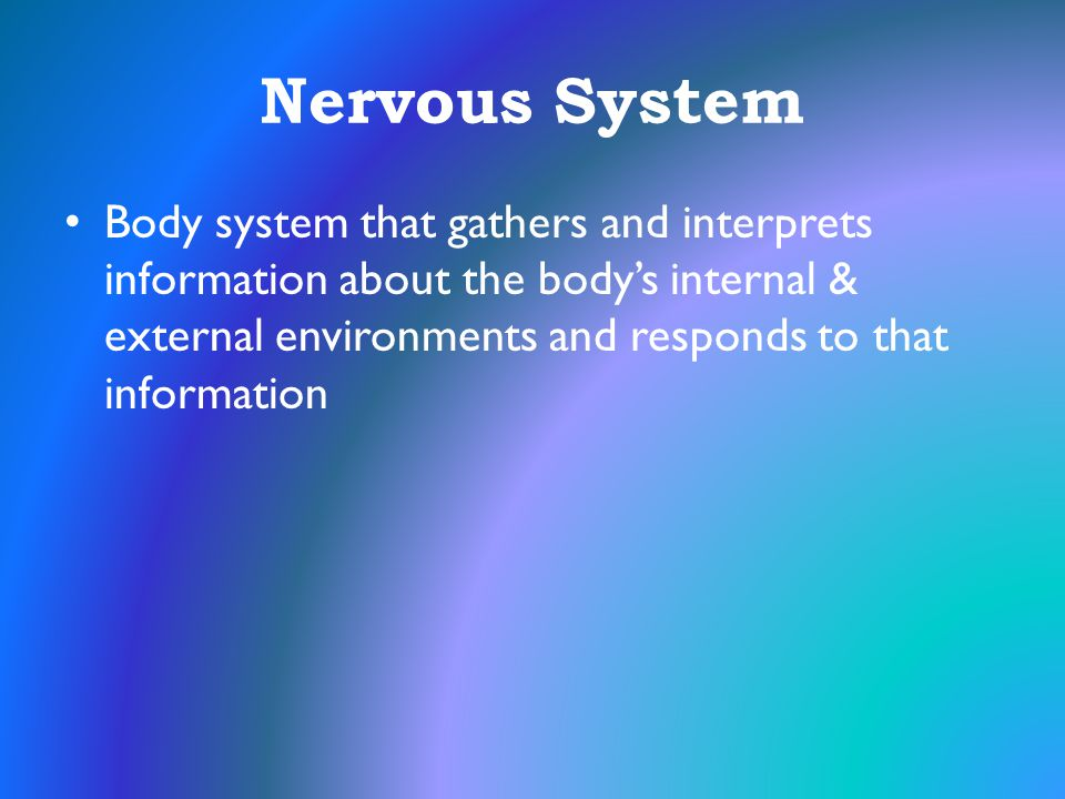 Nervous System Body system that gathers and interprets information about the body's internal & external environments and responds to that information