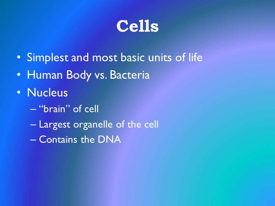 "Cells Simplest and most basic units of life Human Body vs. Bacteria Nucleus – ""brain"" of cell – Largest organelle of the cell – Contains the DNA"