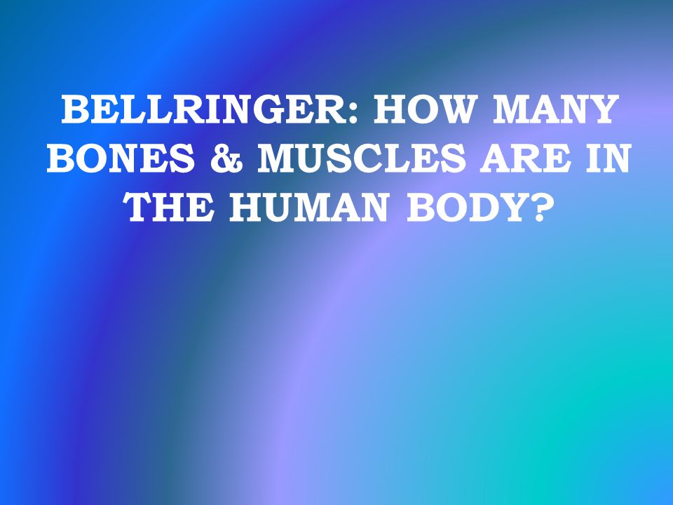 BELLRINGER: HOW MANY BONES & MUSCLES ARE IN THE HUMAN BODY?